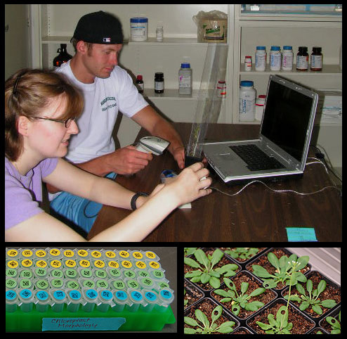 Jessica Reif and Travis Wilson harvesting seed, bar-coded tubes and plants used for starch assays